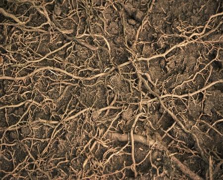 close up wortels met vruchtbare grond achtergrond Stockfoto