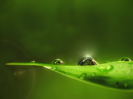 water drop on green leaf background photo