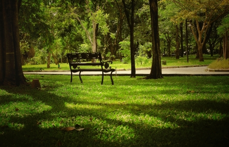bench in shade of green park photo
