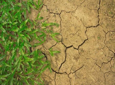 grass in dried cracked ground photo