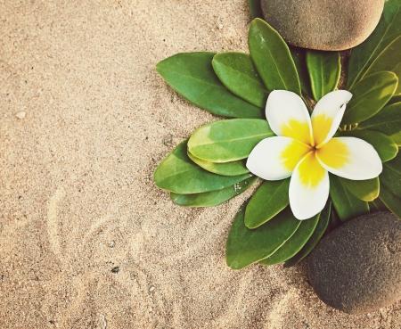 witte frangipani en stenen op zand Stockfoto