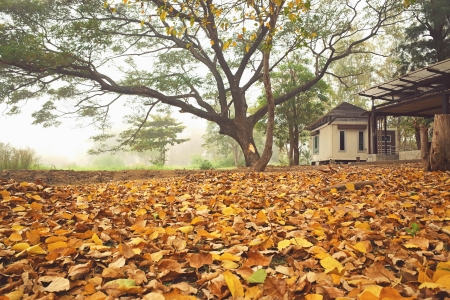 small house and autumn leaves