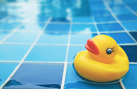 yellow duck in the swimming pool photo