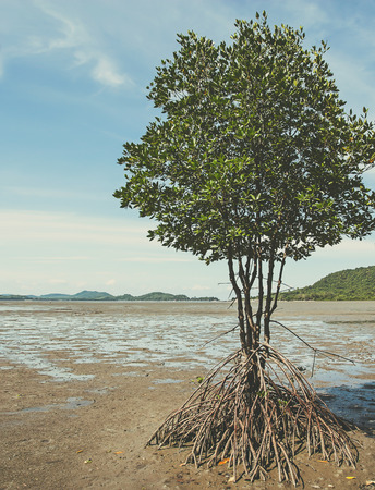 mangrove forest: lonely mangrove tree in clay (retro style)