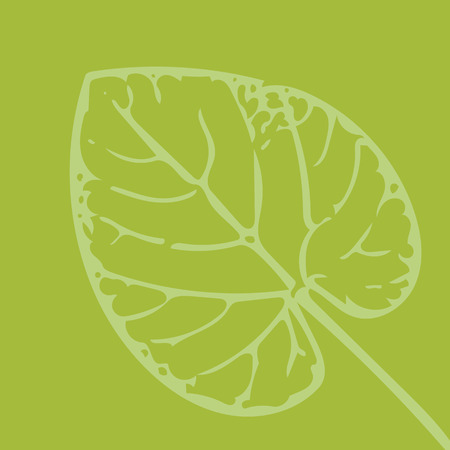 shape of leaf on green background Stock Photo