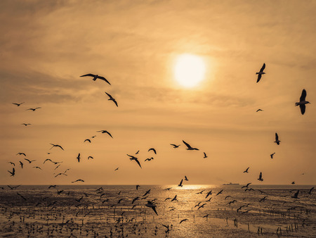 flock of gull with sea and sunlight background