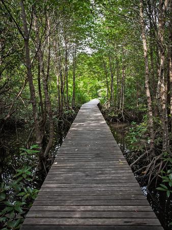 sylvan: wooden walkway in mangrove forest Stock Photo