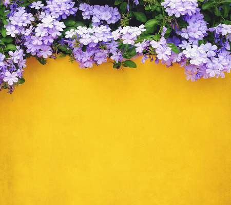 garden styles: flower and yellow cement wall background
