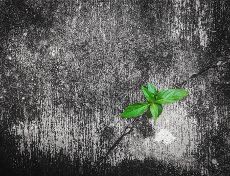 crack: green plant is growing up on cracked concrete