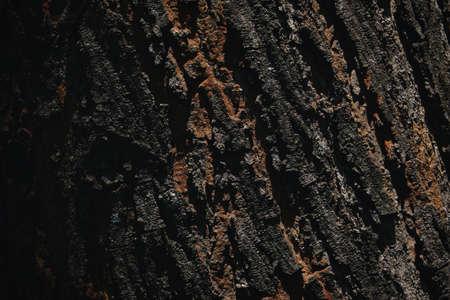 dark texture of a tree bark background.