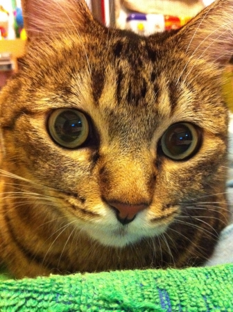 otganimalpets01: My cute fat cat