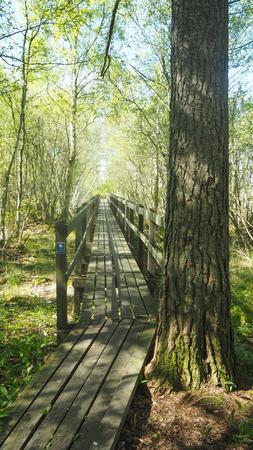 long bridge in forest