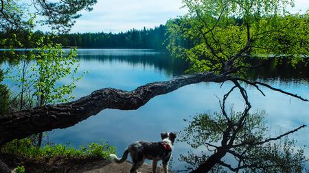 dog having nice view on the lake Standard-Bild - 108395505