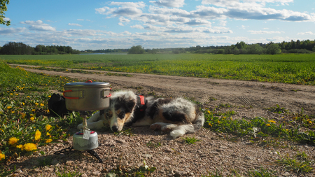 dog watching the camping stove Stock Photo