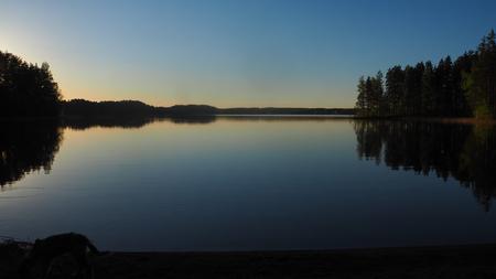 dog at saimaa lake in finland