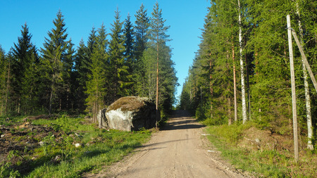 small road with rocks in the forest