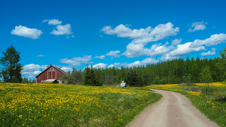 small red finnish house in front of yellow flowers and a road