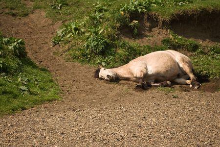 Horseplay - dead or asleep?