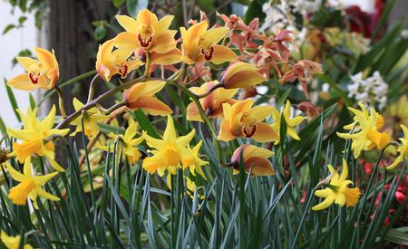 Colourful flowers and daffodils, herald the beginning of spring. Stock Photo - 4802012
