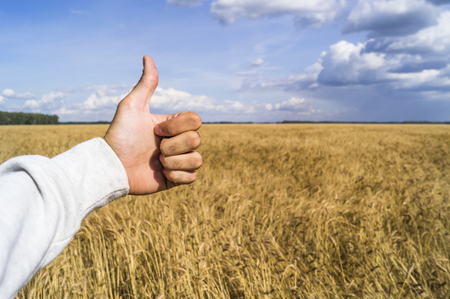 The hand shows the sign like because of a good harvest of wheat
