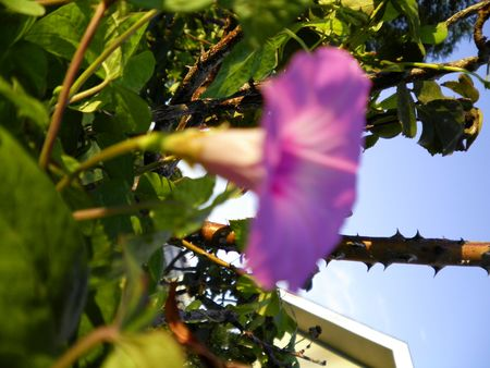 out of focus flower
