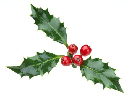 christmas holly and red berries on a white background Stock Photo