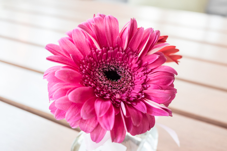 Pink flower in glass vase on wooden table