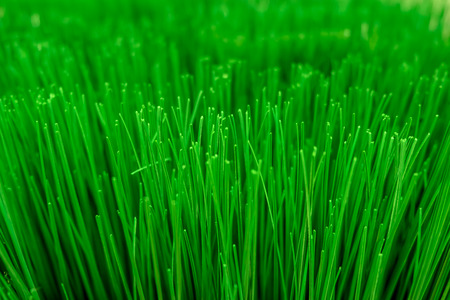 Close up texture of artificial grass with shallow depth of field , abstract background Stockfoto
