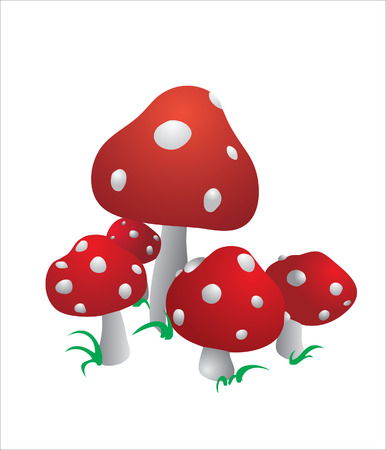 fairy toadstool: The mushroom Illustration