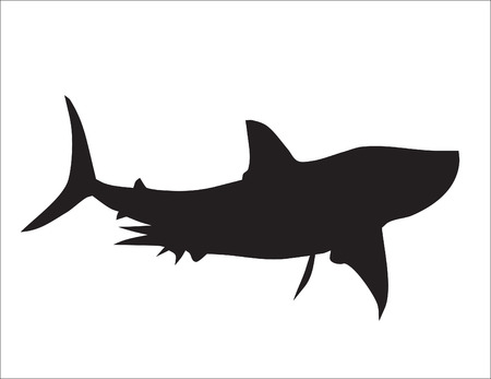 Background. Abstraction. A silhouette of the big white shark Vector