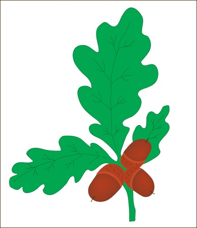 Background. A plant. A branch of an oak with acorns Vector