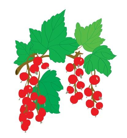 レッドカラント: 背景。葉と枝の赤スグリ