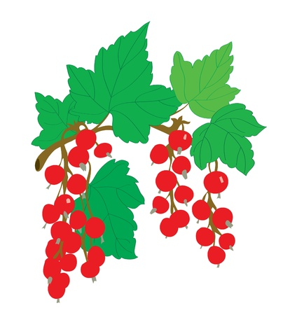 Background. A red currant on a branch with leaves