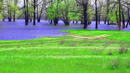 Spring background. A spring landscape. The flooded trees