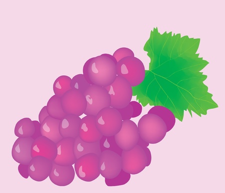 Cluster of juicy ripe grapes. Illustration