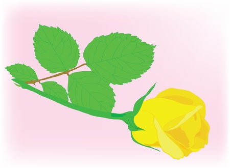 Fine yellow rose with leaves. Vector