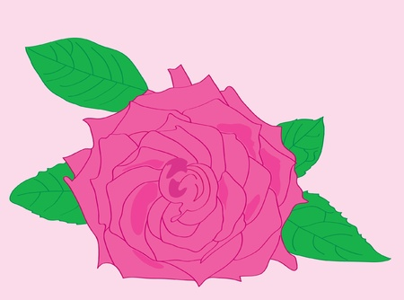 Beautiful pink rose with leaves. Vector