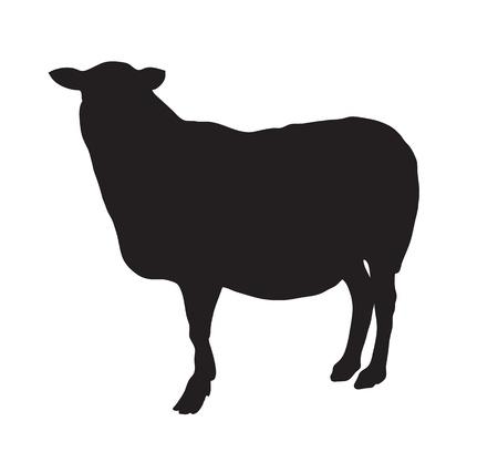 oveja negra: Silueta abstracta negro de una oveja.