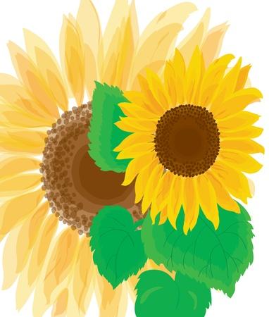 Background. A beautiful bright sunflower Illustration