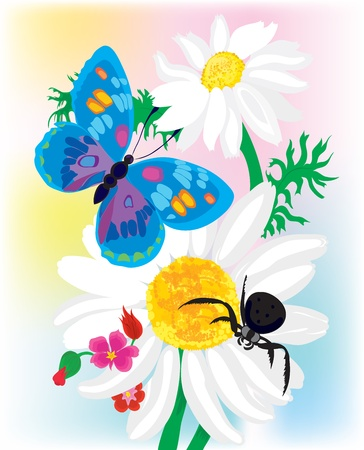 Bouquet of camomiles with the butterfly and a spider Vector