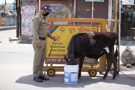 Dehradun, Uttarakhand/India - September 10 2020:A Policeman gives water to cow for drink, wearing face mask.