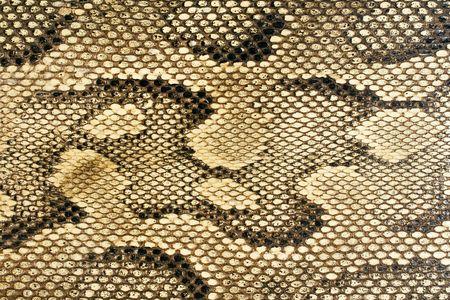 serpiente de cascabel: Snakeskin-Textura