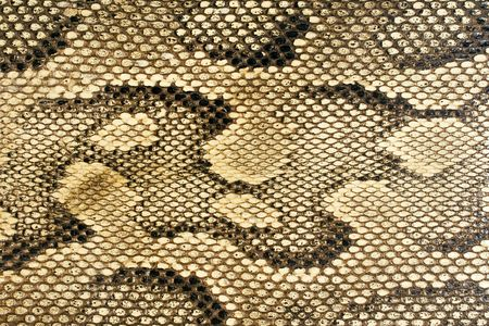 Snakeskin-Texture Stock Photo - 431644