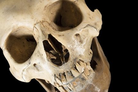 morbid: Skull wClippingPath (Diagonal Front View) Stock Photo