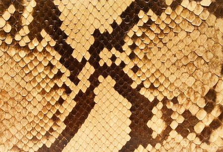 snakeskin: Textures � Snakeskin #05