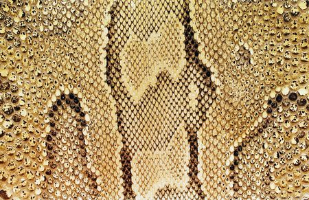 Textures � Snakeskin #03 Stock Photo