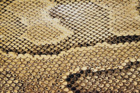 forked: Textures � Snakeskin #04 Stock Photo