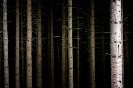 Deep Dark Forest Stock Photo - 433381
