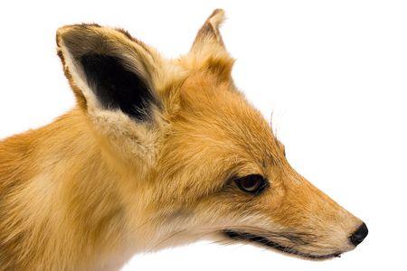 Fox (Side View)