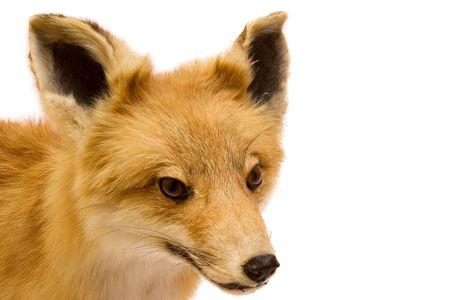 Stuffed Fox